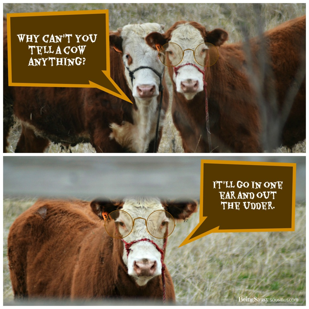 Laughing Cows #1