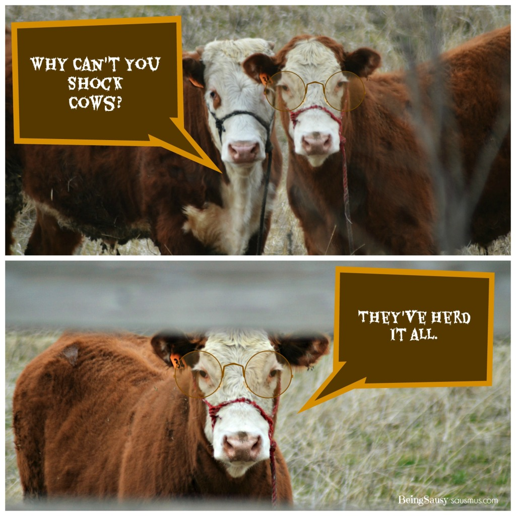 Laughing Cows #2