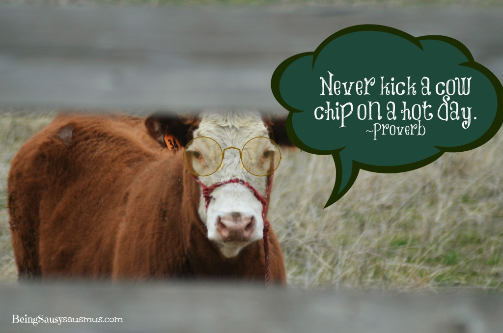 Wise Cow! Saying #1